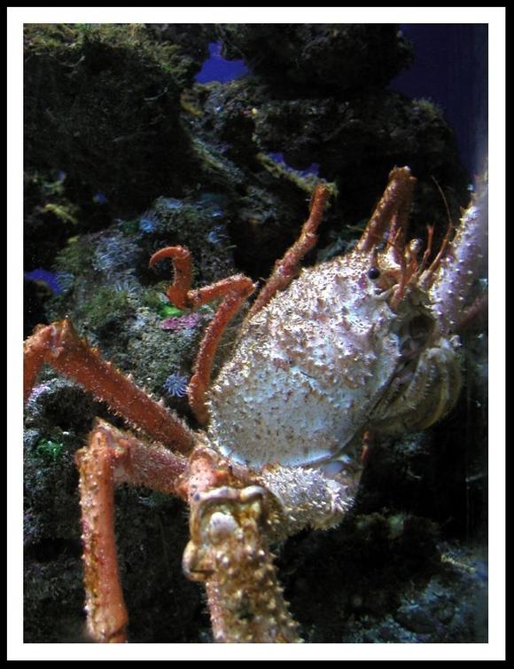 Crustaceele
