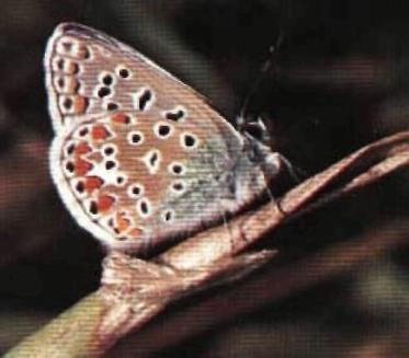 Culori si modele ale fluturilor si moliilor