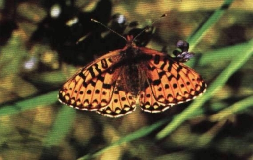 Marimea si forma moliilor si fluturilor