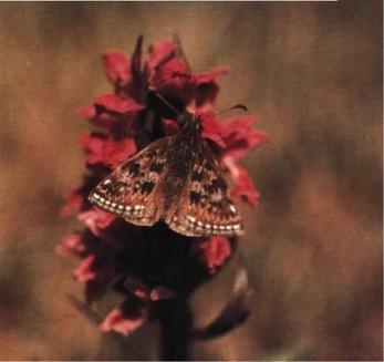 Moliile si fluturii paraziti