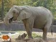 A fost gasit un grup de elefanti pe o insula pustie