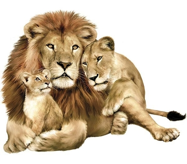 Leul, regele junglei