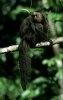 Maimutele si modul lor de a se hrani