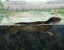 Focile au fost initial animale terestre