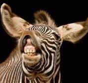 De la afine la zebre: Enciclopedia Vietii a ajuns la 170.000 de descrieri ale speciilor de plante si animale