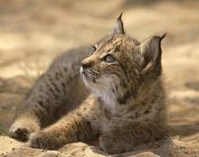 Unul din sase mamifere e amenintat cu disparitia