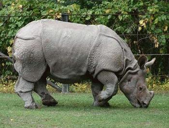Top 10: cele mai rare animale din lume
