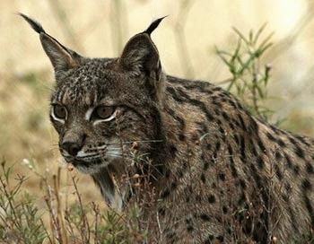 Top 10: cele mai rare animale din lume (II)