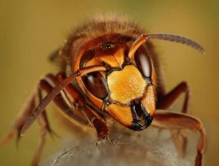 Cum sa intelegem mai bine insectele?