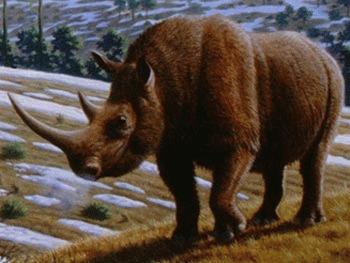 Rinocerul lanos (Coelodonta antiquitatis)