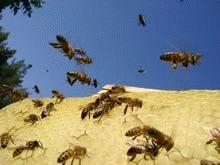 Disparitia albinelor, o lovitura pentru economia britanica