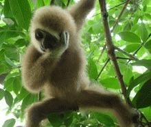S-a descoperit o noua specie de maimuta