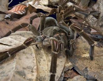 20 de specii rare sau nou descoperite de vietuitoare