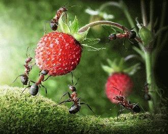 Curiozitati despre furnici