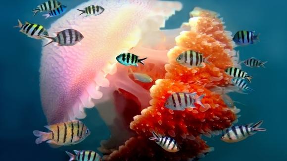 50 de curiozităţi despre meduze