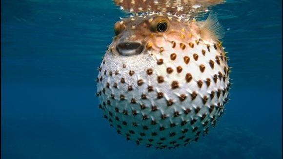 Cele mai spectaculoase adaptări ale animalelor