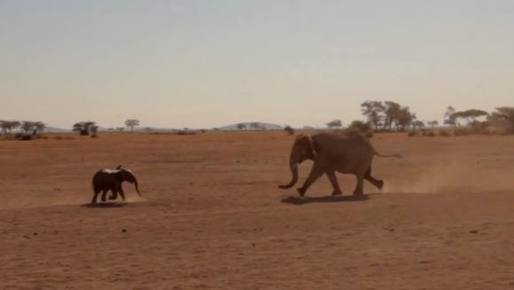 Întâlnirea emoționantă dintre un pui de elefant și mama lui