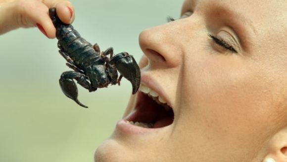 Le datorăm insectelor istețimea. Cum se explică