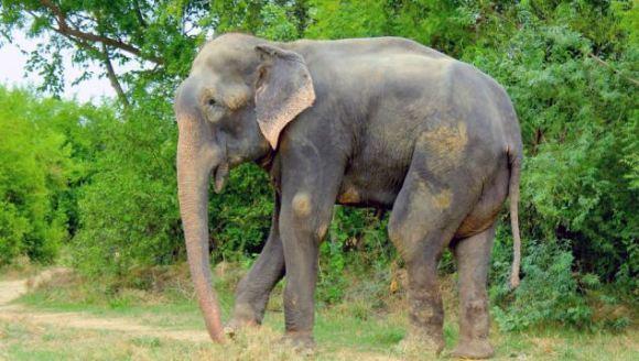 Un elefant torturat timp de 50 de ani a plâns de fericire când a fost salvat