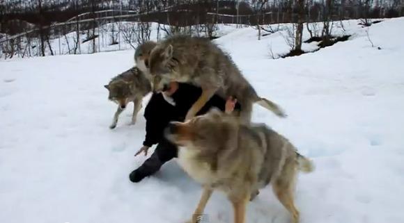 Înconjurată de o haită de lupi... Final fascinant