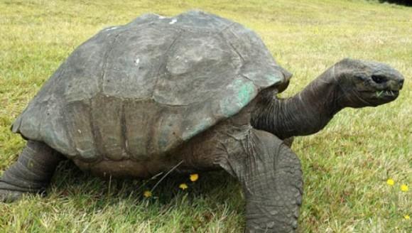 Care este cel mai bătrân animal din lume?
