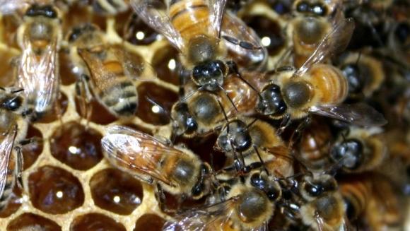 A supravieţuit înţepăturilor a 1000 de albine ucigaşe!