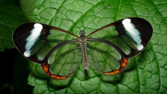 Cei mai frumoşi fluturi din lume