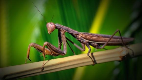 Animale canibale: cele mai ciudate practici de canibalism din lumea necuvântătoarelor
