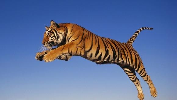 Top 10 cele mai puternice animale din lume