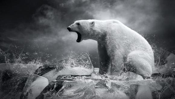 Peste 50% din animalele sălbatice au dispărut de pe Terra în ultimii 40 de ani