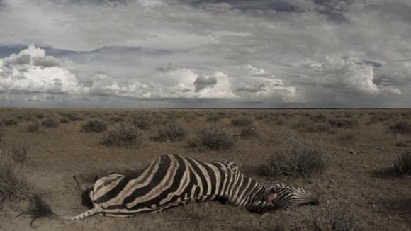 Irezistibila moarte: se simt atrase, îl ingerează, îl transmit şi mor. Despre ce este vorba