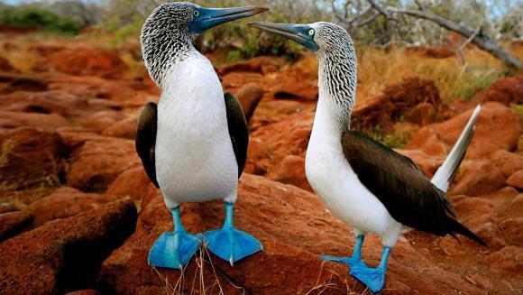 Excepţionala diversitate a animalelor: specii endemice din insulele Galapagos