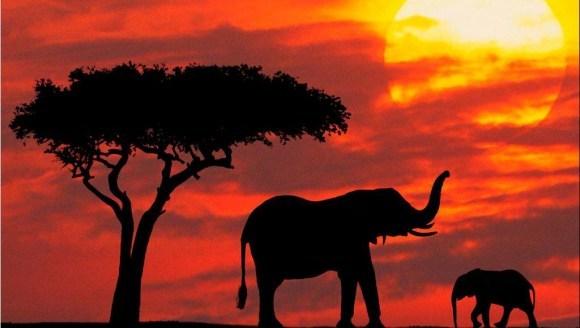 Curiozități elefanți: 5 motive pentru care elefanţii nu trebuie să trăiască în captivitate