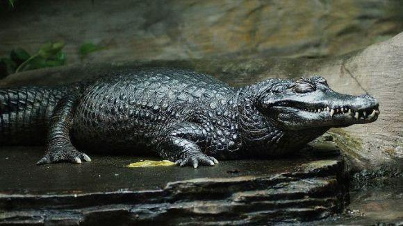Mutaţii incredibile: animale care suferă de melanism - Galerie Foto