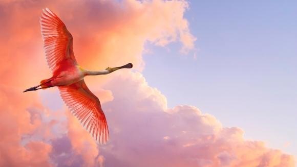 În spiritul sărbătorilor: 10 animale roşii uimitoare