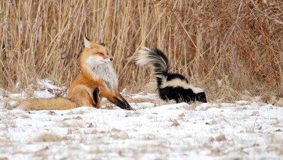 Animale care folosesc mirosul drept armă