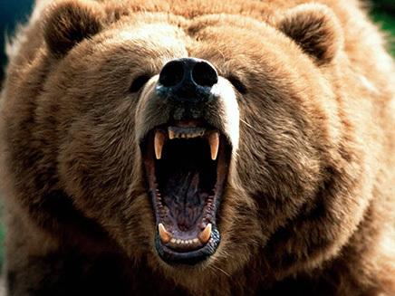 Ce faci dacă te întâlneşti cu ursul? Idei care îţi pot slava viaţa
