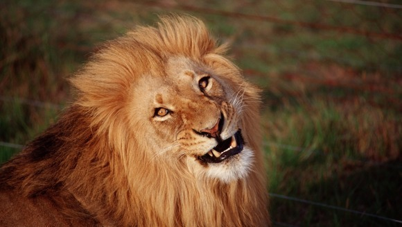Inundația din Tbilisi a omorât toți leii și tigrii de la zoo