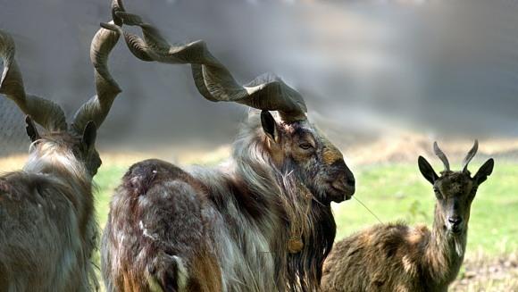 Cele mai scumpe trofee ale animalelor aflate în pregul extincției