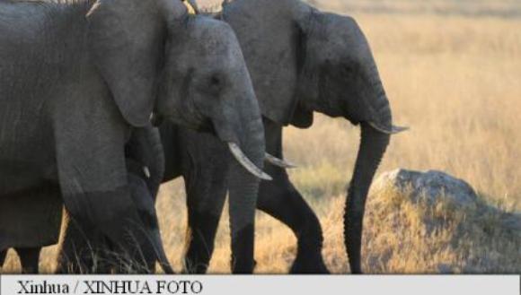 Un elefant și-a ucis însoțitorul și a fugit în junglă cu trei turiști chinezi