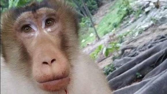 Au vrut să-i facă o farsă unei maimuţe, dar au mutilat-o… – Foto şi Video