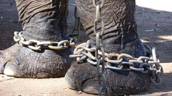 5 metode de tortură la care sunt supuse animalele sălbatice din captivitate