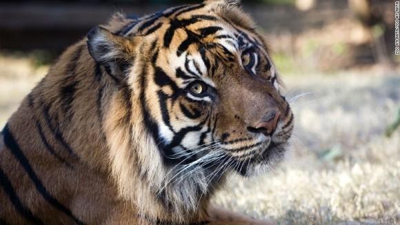"""Grădină zoologică """"înghețată"""", pentru a salva speciile pe cale de dispariție"""