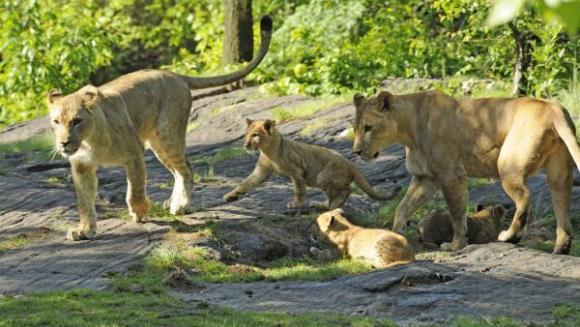 O echipă de expediţie a găsit peste 200 de lei consideraţi dispăruţi