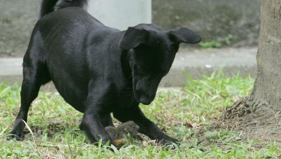 Ce a făcut această veveriță, când a văzut că puiul ei este atacat de un câine (Galerie Foto)