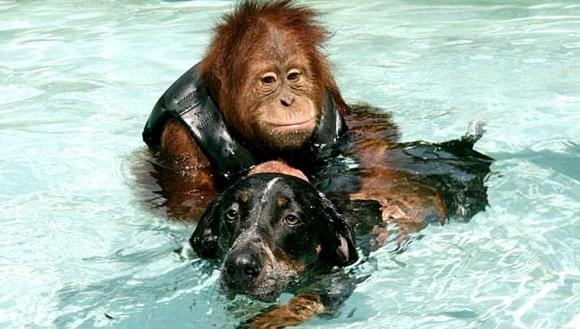 20 de poveşti emoţionante care vă vor schimba total percepţia despre animale - Partea I