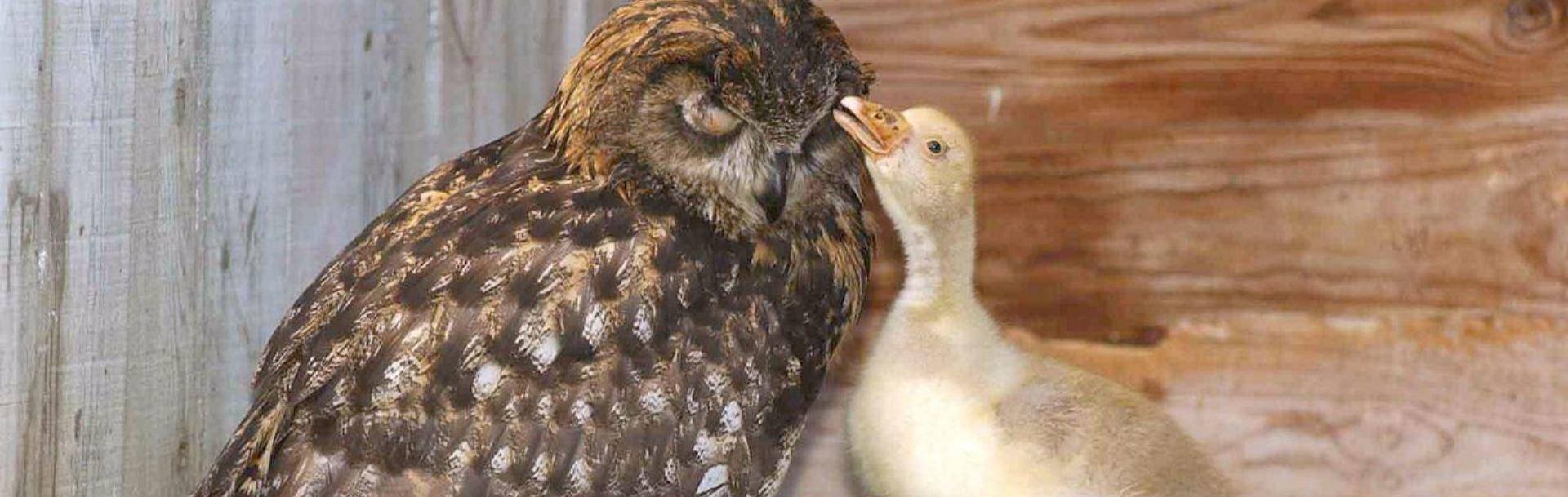 20 de poveşti emoţionante care vă vor schimba percepţia despre animale – Partea a II-a