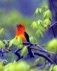 Zborul si migratia pasarilor