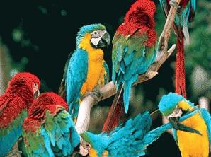 Preocuparile si ingrijirea zilnica a papagalilor