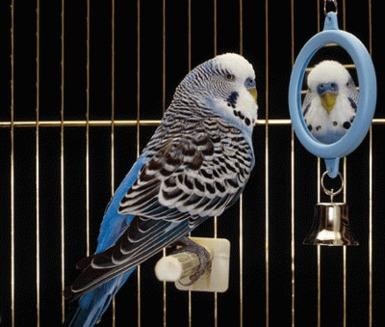 Un camin primitor pentru papagali